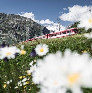 Regionalzug im Sommer Richtung Disentis auf dem Nätschen. Mit auf dem Bild eine schöne Blumenwiese. Nätschen/Uri/Schweiz